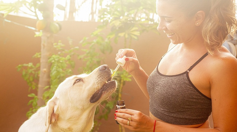 Giving a dog CBD Oil