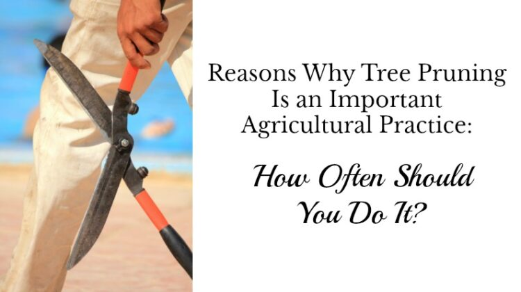 hy Tree Pruning Is an Important Agricultural Practice