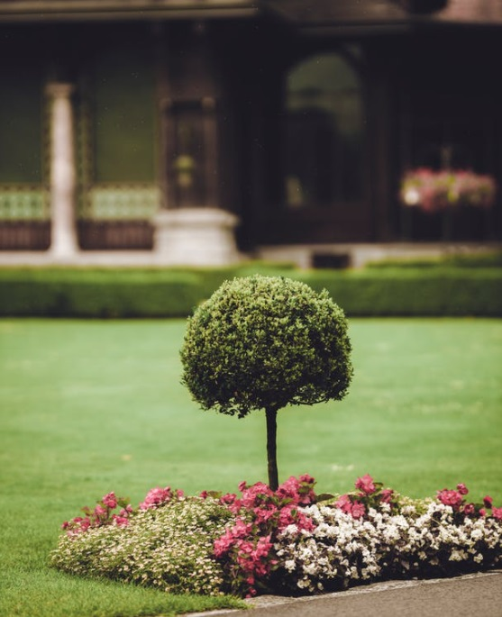 Small Topiary in Flower Bed - Gardening Secrets