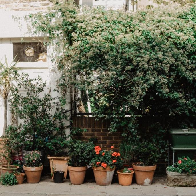 Plants in Pots on Patio - Gardening Secrets