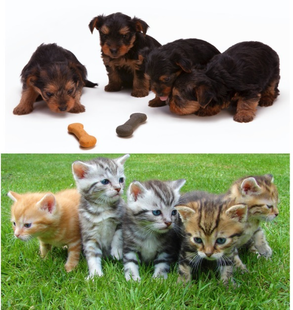 Puppies and Kittens - Can You Get A Pet With A Busy Lifestyle