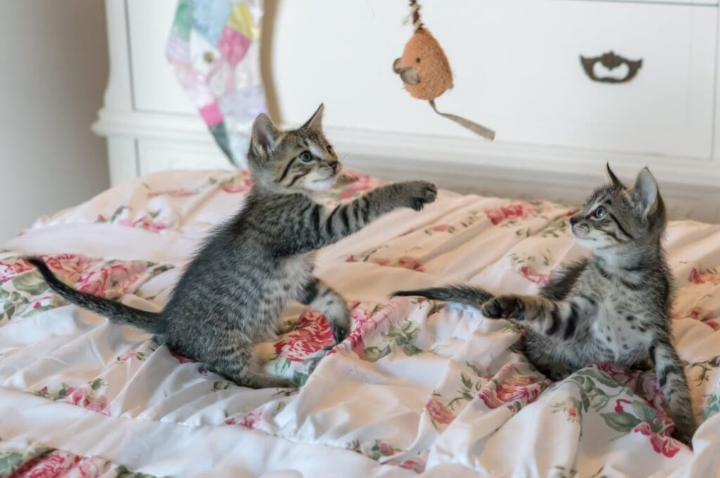 Tabby Kittens Playing with Toy Mouse - Can You Get A Pet With A Busy Lifestyle