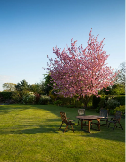 Table and Chairs in Back Yard with Tree in Bloom - Weed Control Services