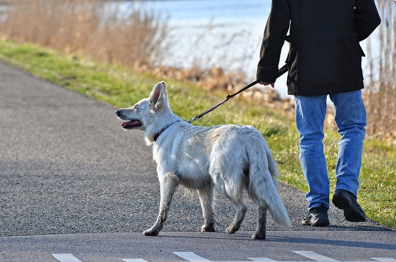 Man in Jeans and Black Jacket with Large White Dog on Leash by a Lake Leash For Your Dog