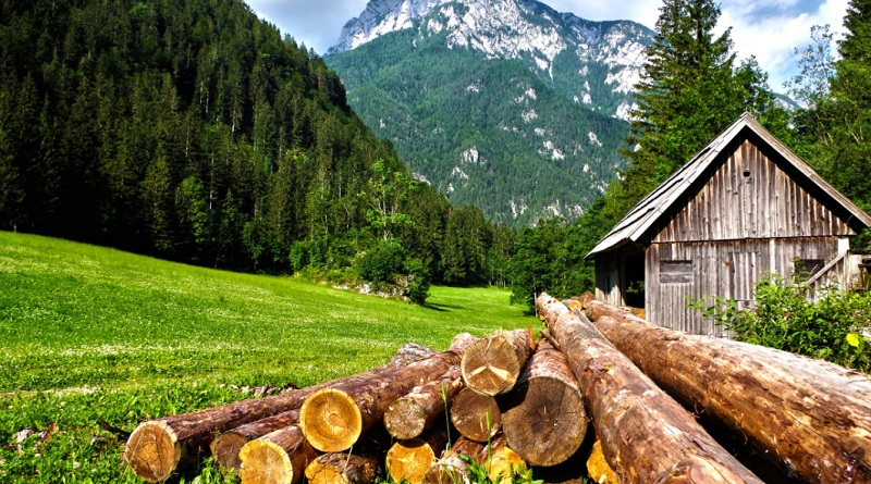 Small Wood Shed in Green Pasture with Large Pile of Logs using a log splitter