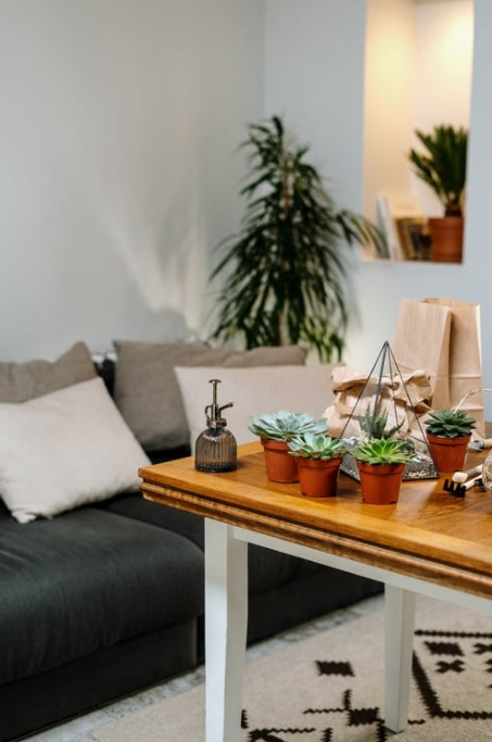 Light and airy room with succulents on a table.