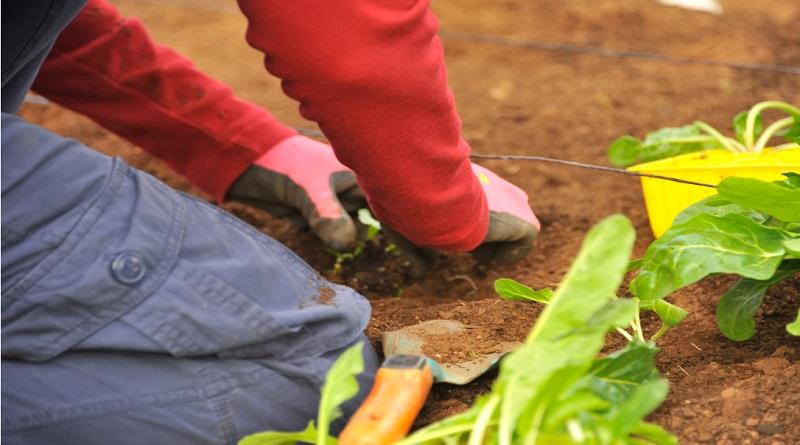 Starting a Thriving Garden Planting in a garden