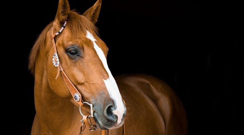 Mastering Your Horse's Diet Beautiful Horse with White Blaze Down Face