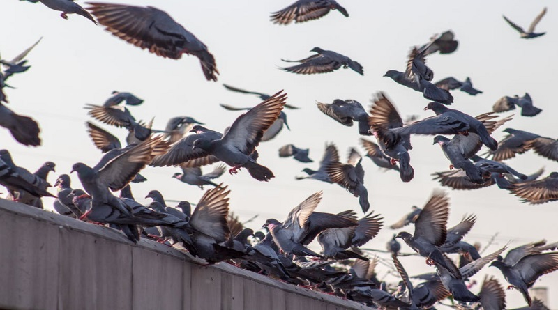 Three Things to Remember When Eliminating Pests From Your Home Birds in sky and on fence