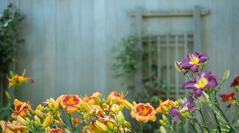 Start a Flower Garden Flower Garden in Back Yard