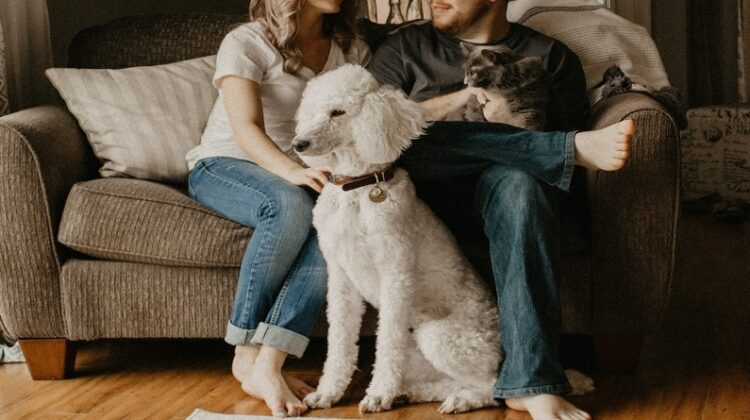 How to Keep the Fire Burning Couple together on sofa with their dog and cat