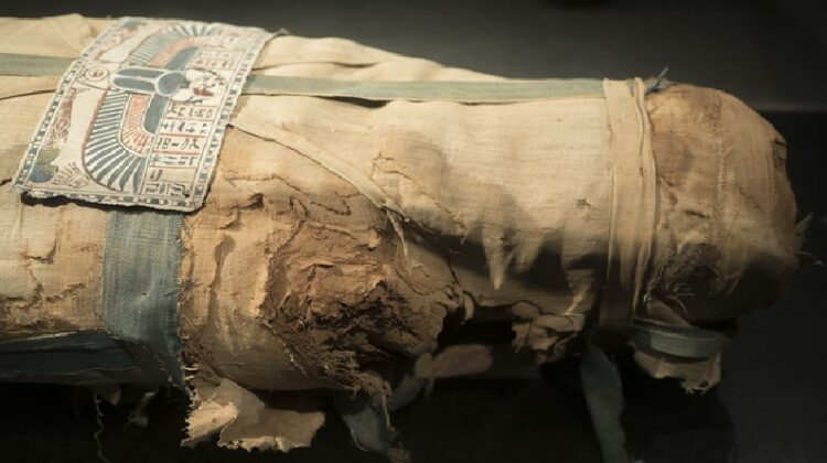 Wrapped Egyptian Mummy