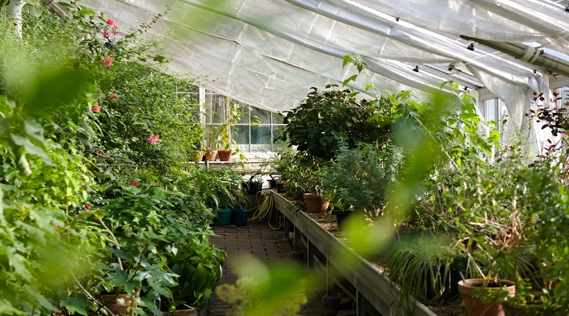 Importance of Greenhouse in a Botanical Garden Backyard Botanical Garden Greenhouse