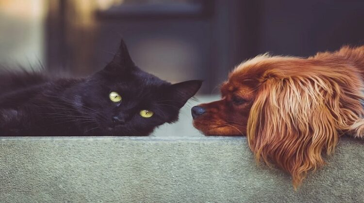 Black cat and brown dog laying down together