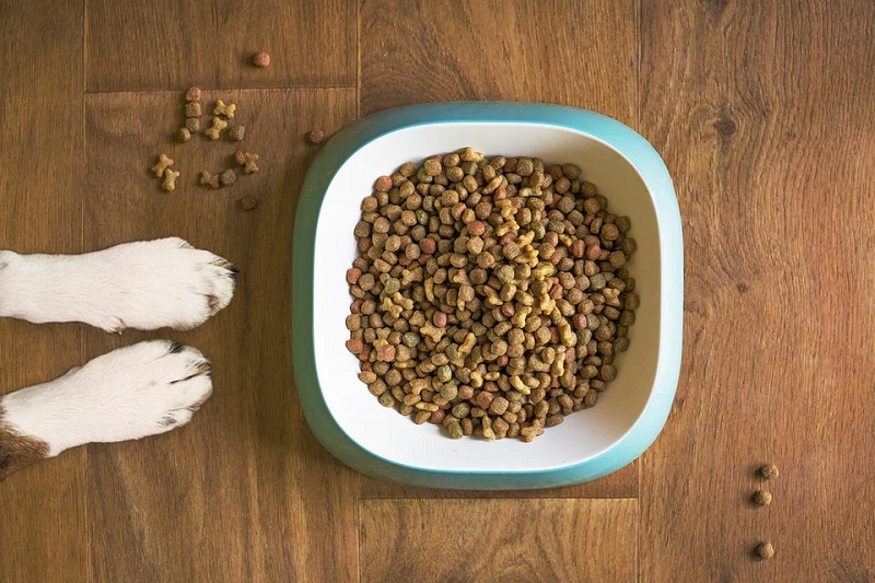 Dogs paws in front of a bowl of dog food Things To Consider Before Getting A Pet