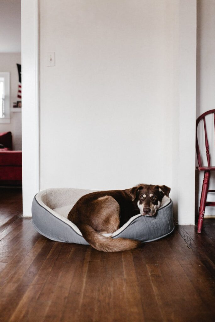 Dog laying in a dog bed