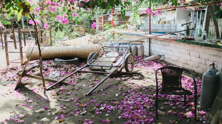 Does Your Garden Need Decluttering Messy garden with debris and yard waste