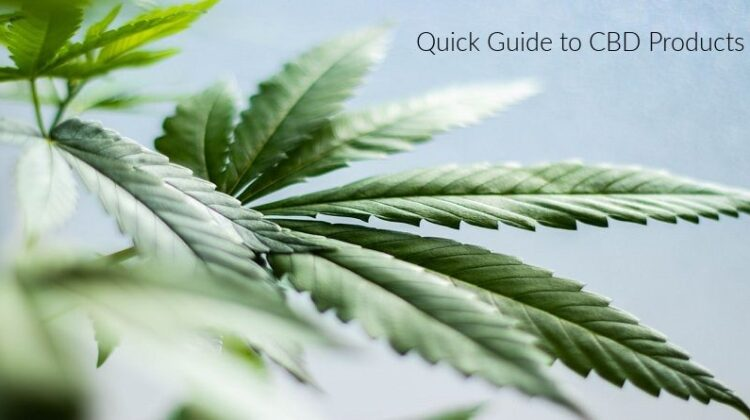 Quick Guide to CBD Products Cannabis Plant