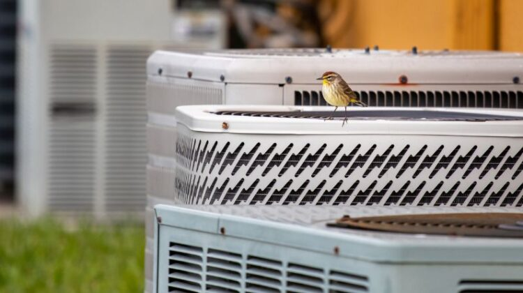 AC Installation and Maintenance Small bird sitting on an HVAC Unit