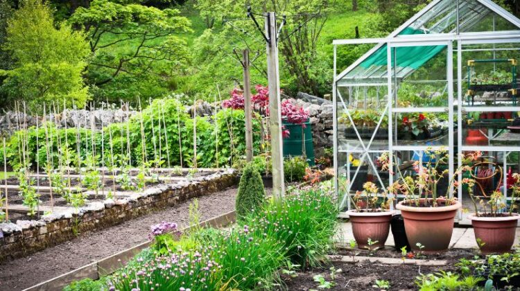 Large Vegetable Garden with Greenhouse