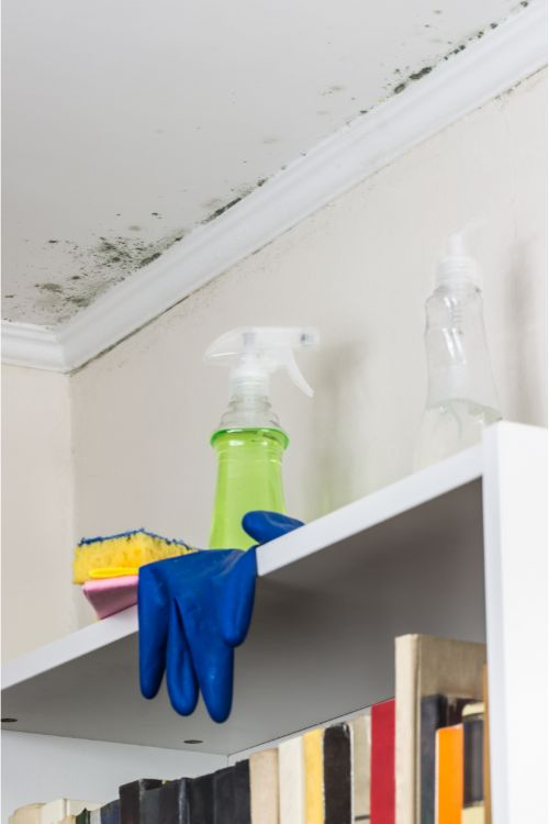 Mold on Ceiling in Living Room When Do You Need a Home Restoration?