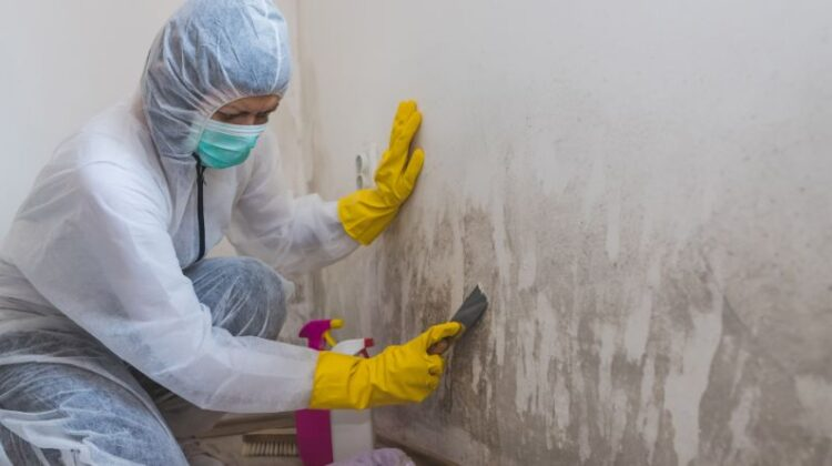 Professional Cleaner Removing Mold from wall
