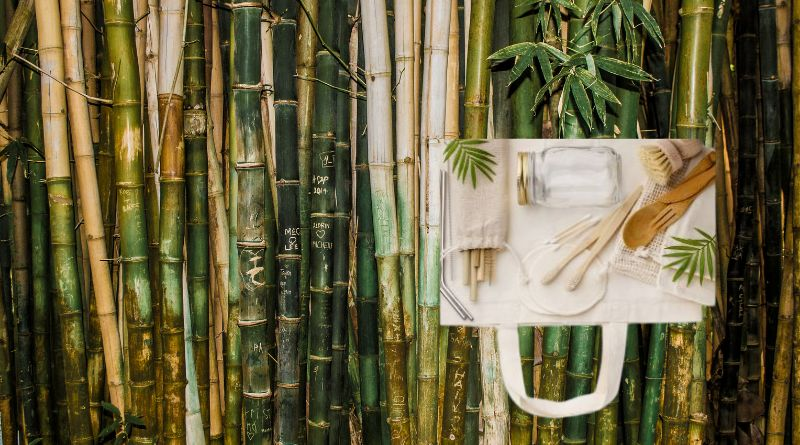 Green Bamboo and sustainable bamboo products