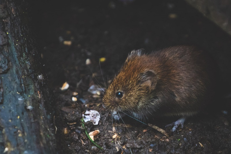 Little Brown Mouse Home Issues You Don't Want To Ignore