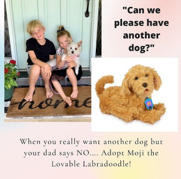 Moji the Lovable Labradoodle