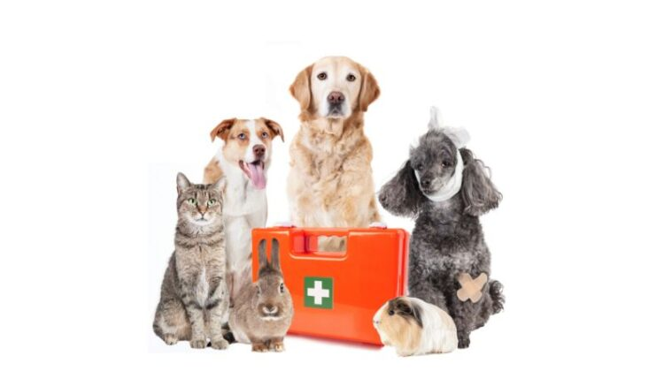 Pets with First Aid Kit