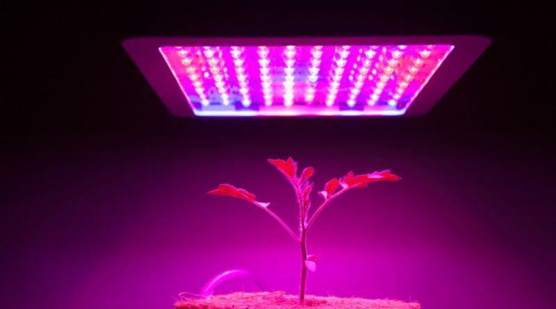 Grow Lights on a young tomato plant