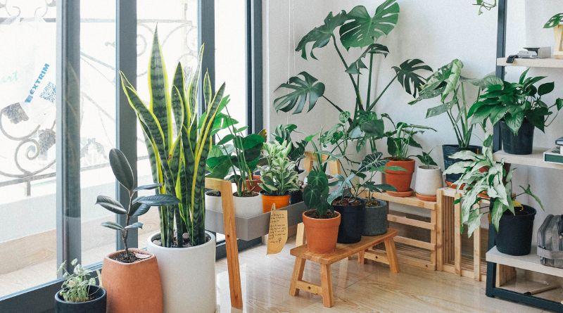 Gardening Tips Indoor Potted Plants in Sunroom