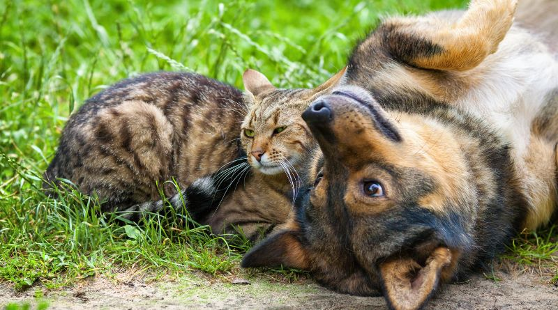 Cat and Dog laying on the grass together