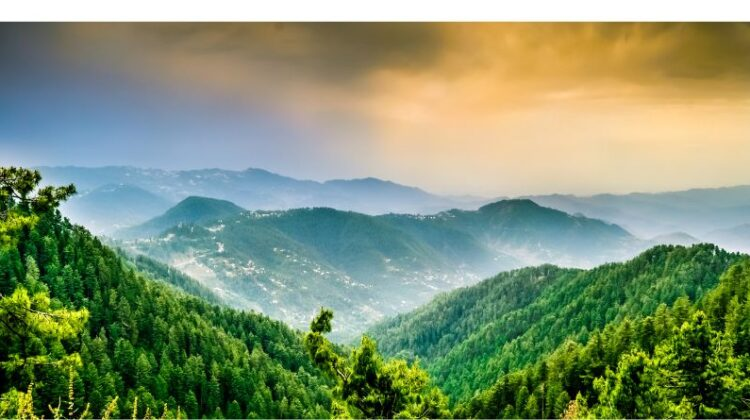 Nature excursions in Pakistan Murree Forested Mountain Tops in Pakistan